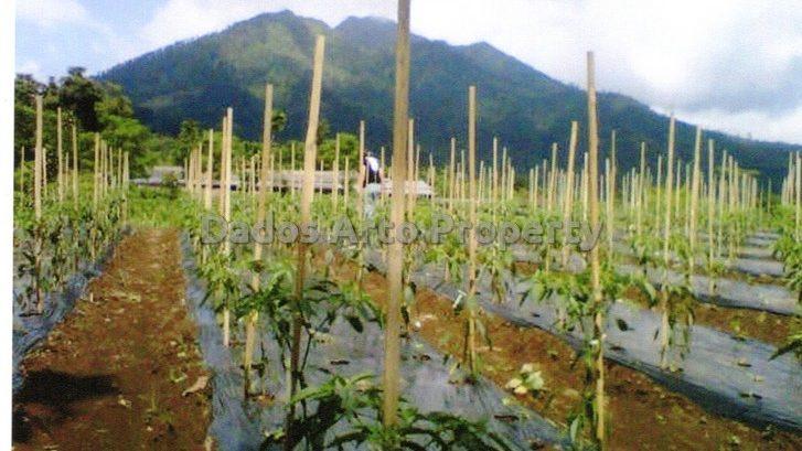 tanah-jual-dijual-wates-kopeng-salatiga002