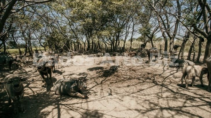 tanah-jual-dijual-pidodokulon-kabupaten-kendal-t1-197-02